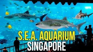 СИНГАПУР - СЕНТОЗА, ИДЁМ В ОКЕАНАРИУМ S.E.A. Aquarium ☼(Сингапур, Синтоза, самый большой в мире океанариум S.E.A. Aquarium. Экскурсию в Сингапур мы брали тут: http://www.phuket-cheap..., 2016-12-05T14:59:45.000Z)