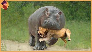 15 Merciless Animal Battles Ever Filmed