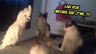 Kocak Sama Sama Bunyi Meong Kucing Ini Jadi Bingung Lihat Kelakuan Si Burung
