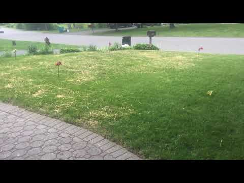 Keep Birds From Eating Grass Seeds( Easy SCARECROW Ideas)