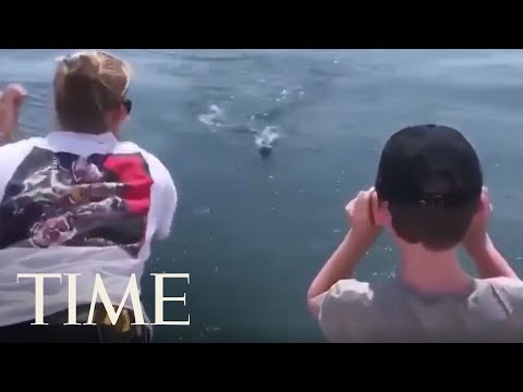 Great White Shark Lunges Toward Fishing Boat, Narrowly Misses Boy   TIME