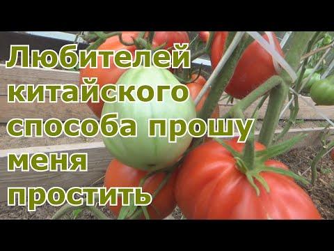 Результаты по китайскому способу выращивания рассады томатов. Повторный эксперимент. Все ЗА и Против
