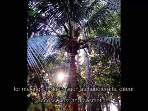 Coco Innovation Presentation