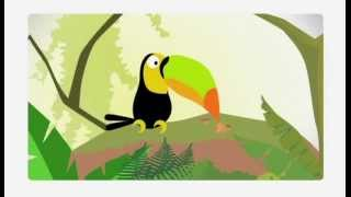 Zoo mix-Выдра/Тукан