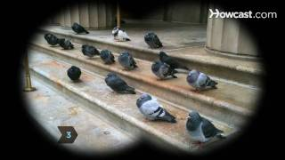 How to Identify Birds: The Pigeon
