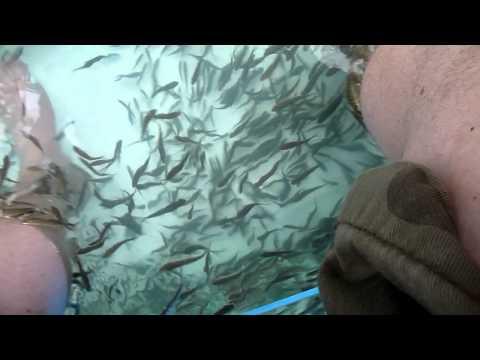 Fish eating humans