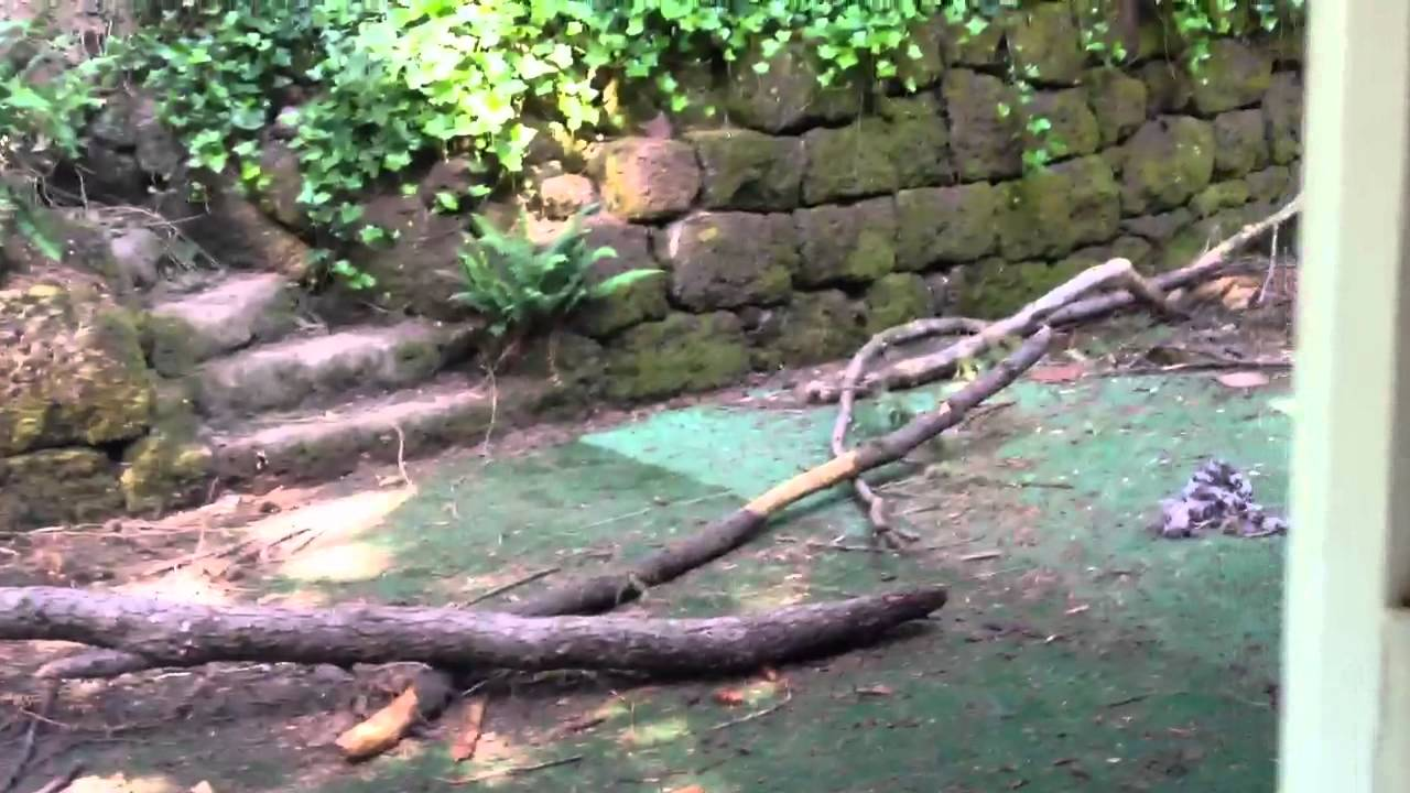 backyard dog park youtube