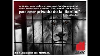 NO A LOS CIRCOS CON ANIMALES EL MURO AC