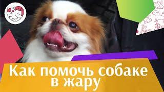 4 совета, как помочь собаке в жару на ilikepet