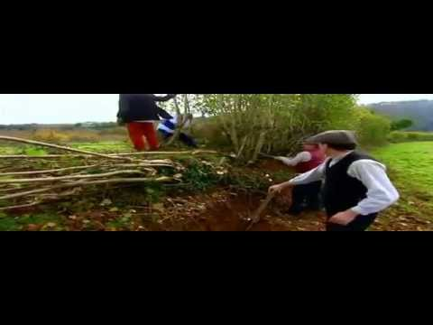 Billhooks & Hedgelaying