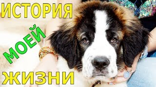 The story of my life. Talking dog / Dog Medvedja Moscow watchdog Bulat