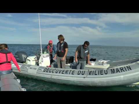 Pension pour chiens et chats près de Rennes (35)de YouTube · Durée:  1 minutes 44 secondes