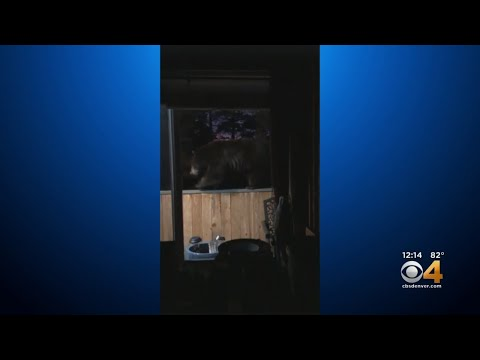 Mark - Bear's balancing act caught on video by homeowner