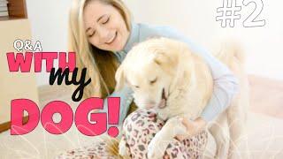 #2 Q&A with my DOG! ~ DLACZEGO NIE MAM CHŁOPAKA?!