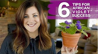 6 Tips For Caring for African Violets