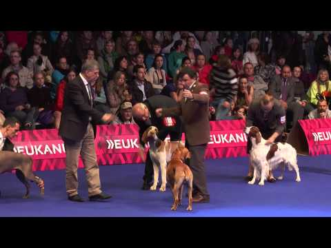 European Dog Show 2014 | Day 4
