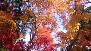 高尾山  佛舎利塔と紅葉