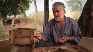 Brazil - baru, the nuts of Cerrado