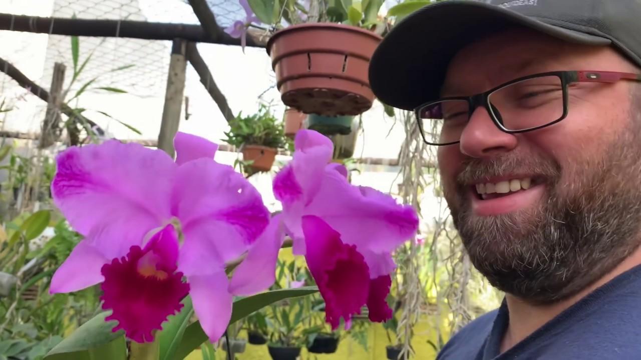 Orquídeas com flores no meu orquidário em reforma | ORQUÍDEAS EM AÇÃO