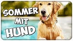 Sommer mit Hund! Hitze, Beschäftigung, Abkühlung, Auslastung und Spaziergänge bei heißem Wetter