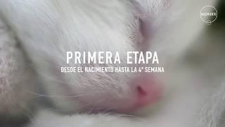 PRIMERA ETAPA - DESDE EL NACIMIENTO HASTA LA 4ª SEMANA