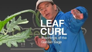 What Causes Leaf Curl? - The Garden Sage 10