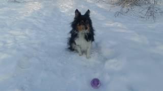 Дейзі з мячем