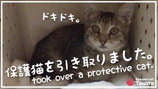 お家に生後5ヶ月の保護猫がやって来た。