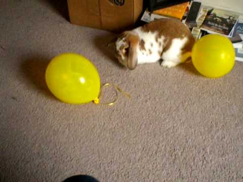 Super Freak bunny, with balloons
