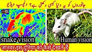 How Animals See The World جانوروں کو یہ دنیا کیسی دکھتی ہے   Animal Facts   Facts About  Animals
