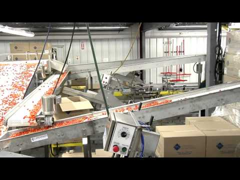 Tomato Packing Line By Lakewood Process Machinery