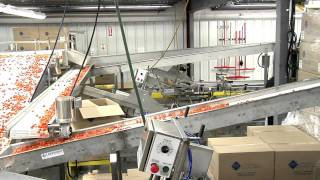 Tomato Packing Line by Lakewood Process Machinery