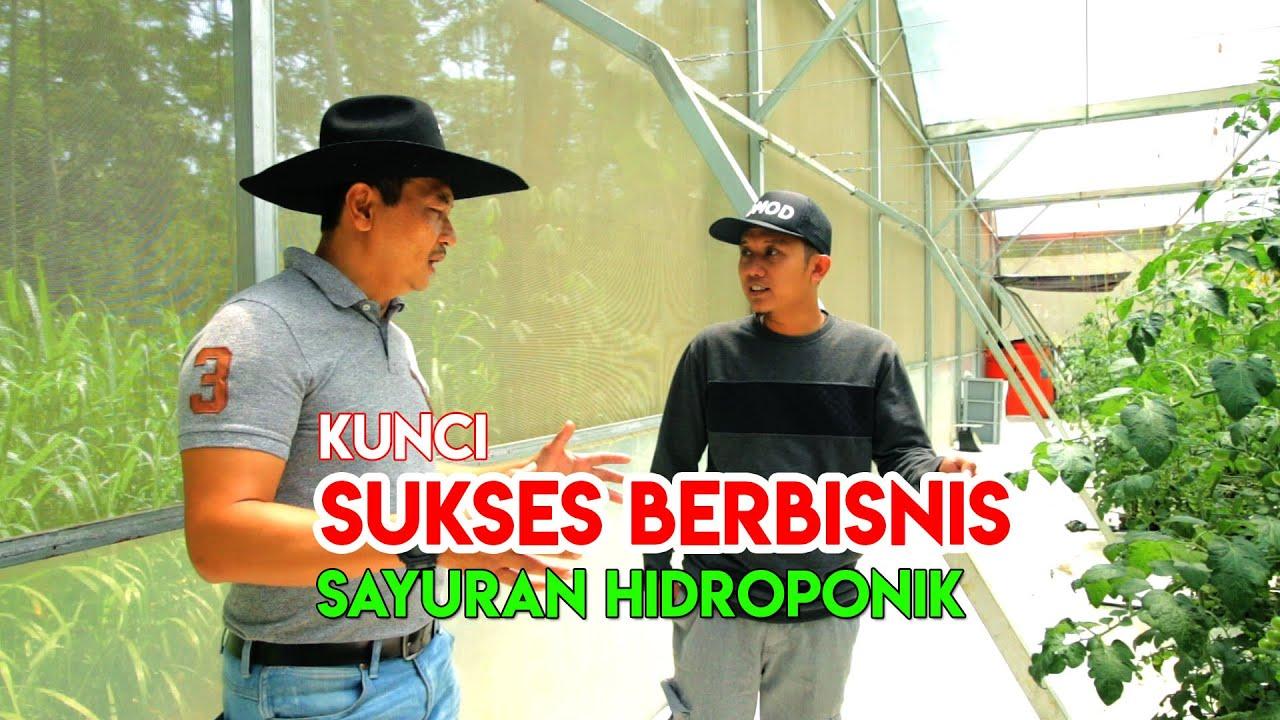 Cara Sukses Berbisnis Sayuran Hidroponik Feat Surya Farm Prima