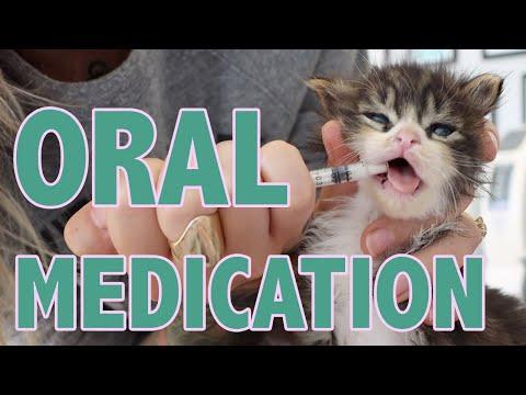 How to Safely Give Oral Medication to Kittens