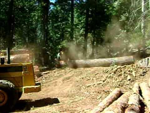 mecchi logging