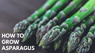 THE PRODUCE GARDEN - growing asparagus