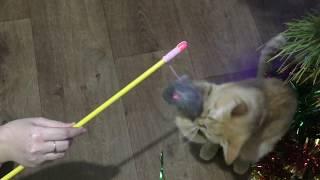Новогодний подарок для кошки Ласки/Новый год/2018