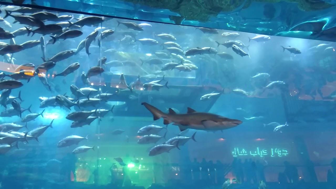 Aquarium Dubai Mall - YouTube