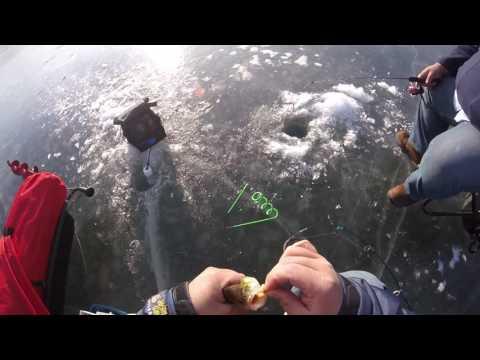 Caught A Perch - Ice Fishing @ Twin Lakes - Palatine IL
