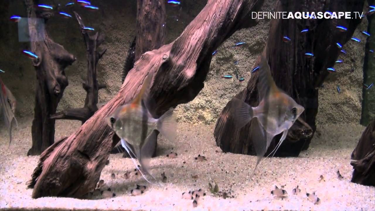 Aquascaping Aquarium Ideas From Zoobotanica 2012 Part 5 Youtube