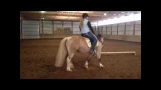 Sold!! America - Chincoteague Pony For Sale