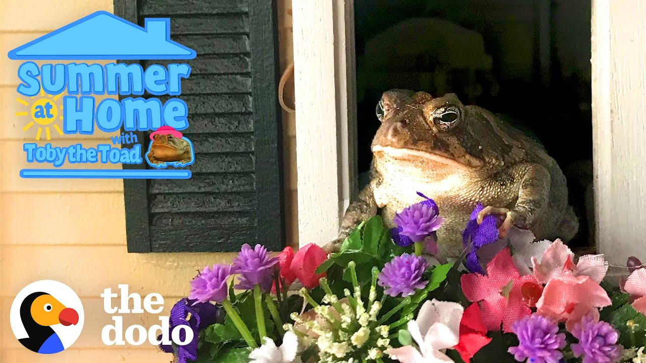 Summer At Home With Toby The Toad | Dodo Family + Kids Special | Videos For People Who Love Animals