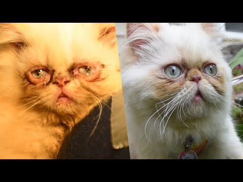 Cute Cat Conquers Puppy Mill Past