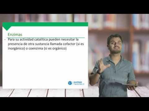 Biología - Enzimas Y Método Científico - Clase N°2 2019