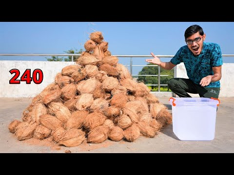 How Much Sweet Water in 240 Coconuts? 240 नारियल में कितना पानी निकलेगा? Surprising Results