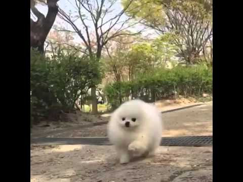 Cute Dog Running Around Like He S In A Video Game Youtube