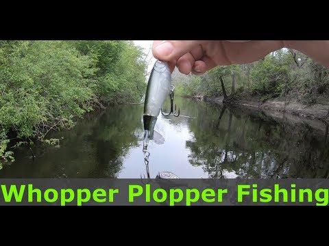 Suwannee River Bass Fishing! Whopper Plopper!