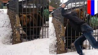 露ムルマンスク州で、酔っ払いの男性がふざけて熊の檻の中に手を入れ、...