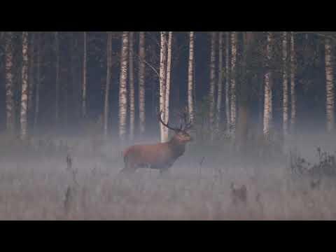 Wildlife in Latvia