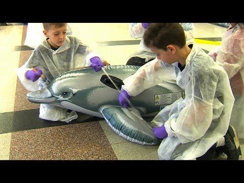 Dolphin Stranding Simulation - Nuckols Farm Elementary School